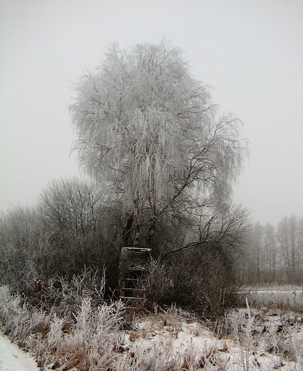 winterkansel_2